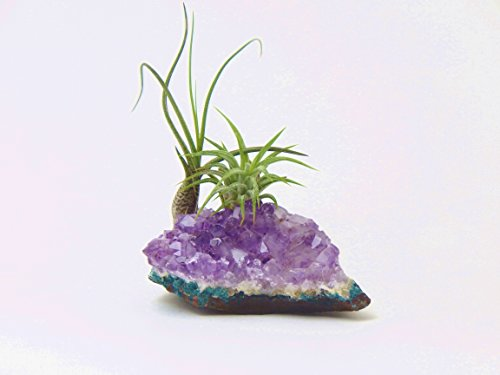 Bliss Gardens Purple Amethyst Crystal Quartz / Healing Garden / Terrariums / Great Gift / Paper Weight