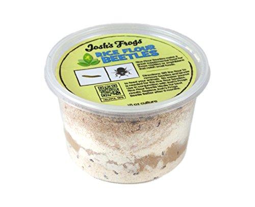 Josh's Frogs Rice Flour Beetle Culture (16 oz)