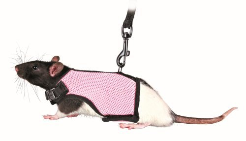 Trixie Pet Products 61511 1.20 m Rat Soft Harness with Leash-Nylon, Various, 12-18cm ()