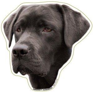 Black Labrador Retriever - Accessories Decorative Retriever Labrador