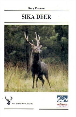 (Sika Deer)