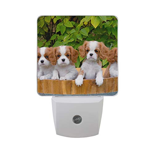 OuLian Night Light Cute Cavalier King Charles Spaniel Led Light Lamp for Hallway, Kitchen, Bathroom, Bedroom, Stairs, DaylightWhite, Bedroom, Compact