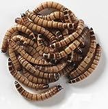 5000 Live Gutloaded Superworms Large