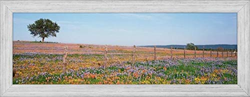 Easy Art Prints Panoramic Images's 'Texas Bluebonnets and Indian Paintbrushes in A Field, Texas Hill Country, Texas, USA' Premium Framed Canvas Art - 24