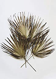 Afloral Pack of 5 - Dried Palm Leaves in Gold Bronze