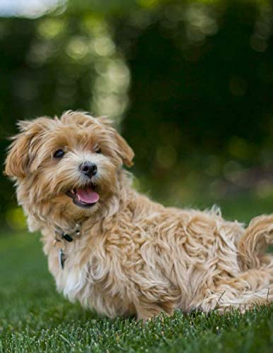 Maltipoo Dog Training Journal: Journal measurements 8.5
