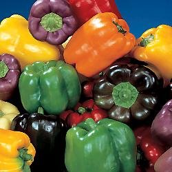 Organic Rainbow Bell Pepper 40 Seeds, - Pepper Bell Chocolate