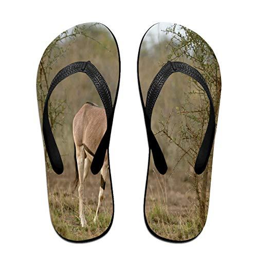 Cocoa trade Flip-Flops Arabian OryxNon-Slip Open Toe Slim Sandals for Youth Size:L