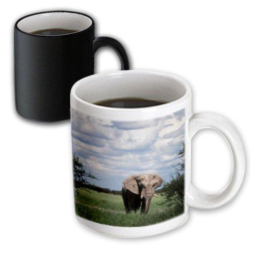 """3d Rose mug_209521_3 """"Namibia, Etosha NP, Elephant young ..."""