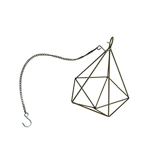 Fenteer Hanging Irregular Geometric Metal Tillandsia Air Plants Holder Rack Wall Table Ceiling Decor - Brass, 16x10x23cm by Fenteer