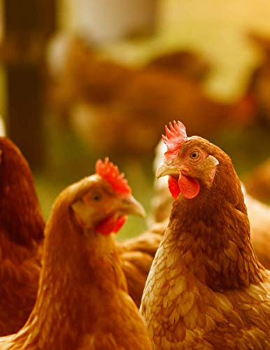 (Notebook: Chickens poultry free running happy hens free range chicken egg eggs pen cage chick chicks)
