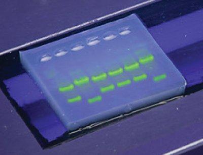Dna Electrophoresis Gel - SYBR Safe DNA Stain, 10,000 X