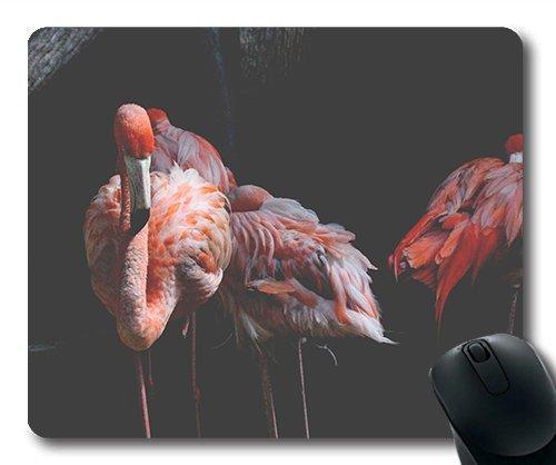 Winter Aviary - Gaming mat pad animal avian aviary 950049 (1) Cute hummingbird animal theme mouse pad