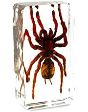 QTMY Biology Science World Collection of Real Insect Specimen Paperweight (Black Moss Spider(Tarantula))