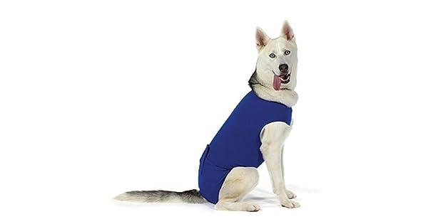 Amazon.com: kvp recova Camisa E-Collar alternativa Pet ...