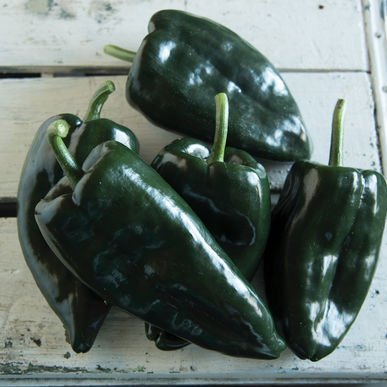 David's Garden Seeds Pepper Hot Ancho Baron R36T72Y (Multi) 25 Hybrid Seeds