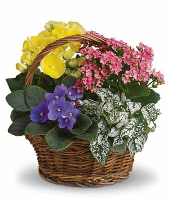 Farewell Tribute - Same Day Sympathy Flowers Delivery - Condolence Flowers - Funeral Flower Arrangements - Sympathy Plants