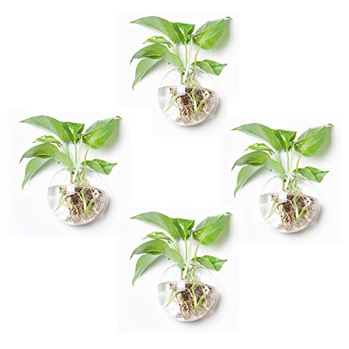 Orimina Pack of 4 Glass Planters Wall Hanging Planters Round Glass Plant Pots Hanging Air Plant Pots Flower Vase Air Plant Terrariums Wall Hanging Plant Container, 4.7 Inch Diameter
