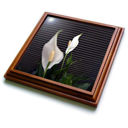 3dRose Jos Fauxtographee- White Day Lilly - White day lillies with one blurred and one in focus - 8x8 Trivet with 6x6 ceramic tile (trv_290444_1) ()