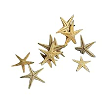 GraceAngie Micro View 40-Pack Natural Small Starfish For DIY Home Decoration Decor Sandy Beach (1.5-2.5)