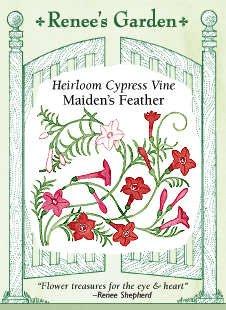 Cypress Vine - Maiden's Feather - Loving Vines