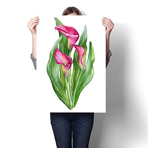 - Wall paintings Bouquet of pink calla lily Zantedeschia rehmannii flower Watercolor hand drawn painting illustration isolated on a white background Modern Wall Art for Living Room Decoration 32