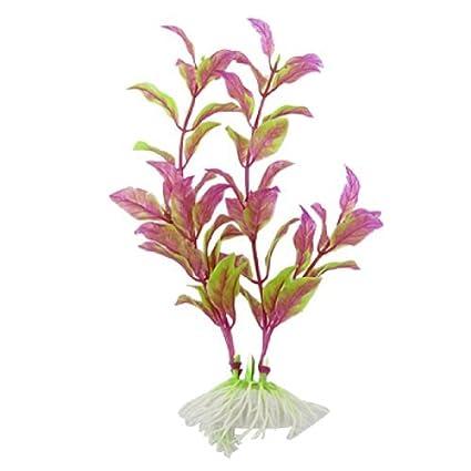 Amazon.com : eDealMax plástico pecera plantas de ornato, 7-pulgadas de Largo, púrpura/Verde : Pet Supplies