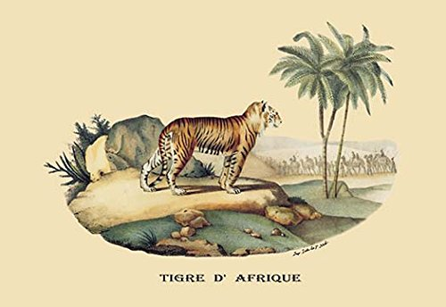 Buyenlarge Tigre d'Afrique (Tiger) - Gallery Wrapped 32