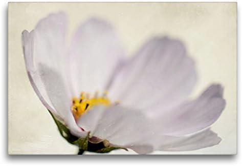 Premium - Lienzo Textil, 75 x 50 cm, Horizontal, diseño de Flores de Verano delicadas, Cuadro sobre Bastidor, Imagen sobre Lienzo auténtico, impresión de Verano, impresión de calvendo