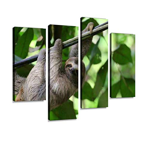 (Young Sloth Hanging on a Cable, Costa Rica Canvas Wall Art Painting Pictures Modern Artwork Framed Posters for Living Room Ready to Hang Home Decor 4PANEL)