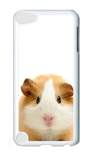 Reg Guinea Pig - iPod 5 Case,VUTTOO Cover With Photo: Guinea Pig For iPod Touch 5 - PC White Hard Case
