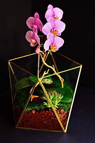 Stained Glass Terrarium Cube Geometric Terrarium Cactus Terrarium Minimalist Planter Succulent Terrarium Coffee Table Decor Modern Home Decor Glass Box 10 ()