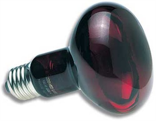 zoo med red infrared heat lamp - 1