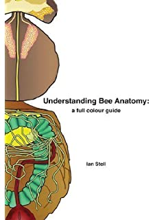 understanding bee anatomy a full colour guide