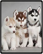 How Much Do Husky Puppies Cost Siberian Husky Puppies For Sale