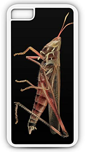 iPhone 8 Plus 8+ Case Grasshopper Wildlife Nature Insect Bug Customizable by TYD Designs in White Plastic Black Rubber Tough -