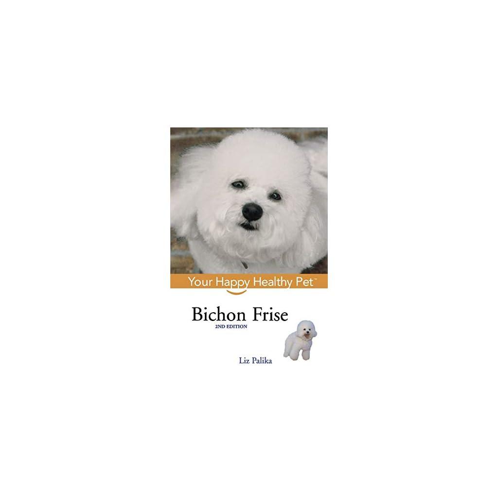 Bichon-Frise-Your-Happy-Healthy-Pet