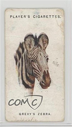 Grevy's Zebra Ungraded COMC Poor (Trading Card) 1931 Player's Wild Animals' Heads by Arthur Wardle - [Base] #50 from Unknown
