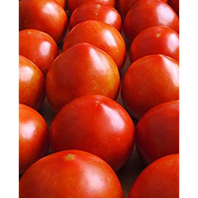 Early Girl Tomato Seeds (100 Seeds) : Garden & Outdoor