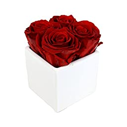 Luxe Bloom Home Collection 4 Fresh Cut Preserved Crimson Red Roses in a 3\