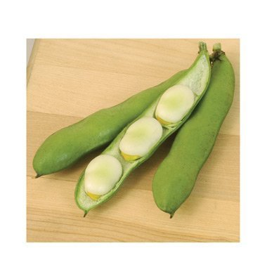 David's Garden Seeds Bean Fava Windsor D2141 (Green) 25 Open Pollinated Seeds