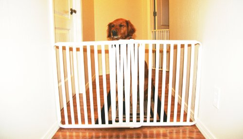 Rover Company Cat and Dog Gate, 24-Inch