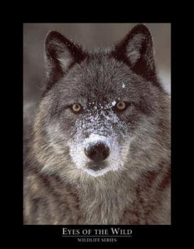 Gray Wolf Wall Decor Posters for Any Room in Your Home, Art Set (3 Pack)