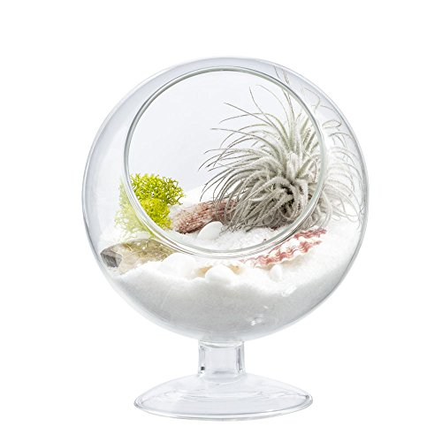 410w9yYU%2BKL - Mkono Air Plant Terrarium 5 Inch Succulent Glass Planter Container Plant Display Vase with Pedestal