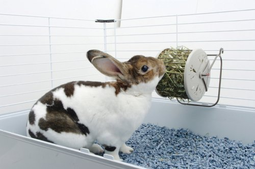 Image of Living World Hay Feeding Station for Pets