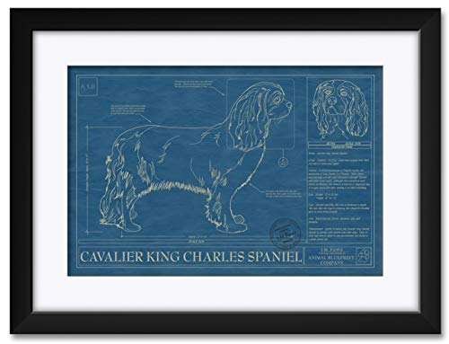 - Cavalier King Charles Spaniel Professionally Framed & Matted Hand-Drawn Dog Blueprint by Robert Redding. Print Size: 13