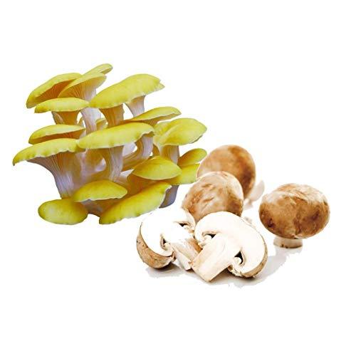 Qenci 100pcs/ Bag Perennial Mushroom Seeds Outdoor Edible Healthy Vegetable Plant Vegetables