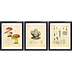 Ink Inc. Psychedelics Hallucinogenic Psychoactive Plants Vintage Botanical Art Prints – Set of 3 – LSD, Peyote, Magic Mushrooms – 8x10 Matte Unframed
