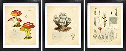 Ink Inc. Psychedelics Hallucinogenic Psychoactive Plants Vintage Botanical Art Prints – Set of 3 – LSD, Peyote, Magic Mushrooms – 8x10 Matte Unframed ()