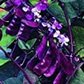 Outsidepride Hyacinth Bean - Red Leaved